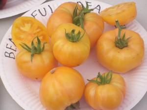 Variété de Tomate jaune: Beautiful deamer
