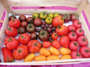 Faîte de la tomate 03