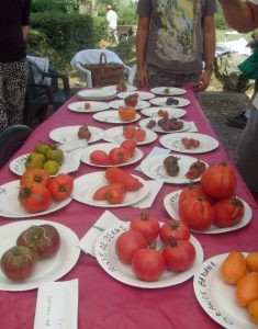 Faîte de la tomate 04