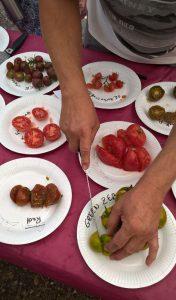 Faîte de tomate 05