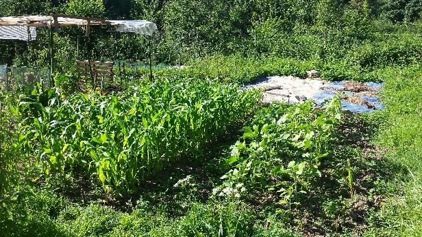 Aap Demarrage De Saison Au Jardin Potager 25 Et 26 Mars A