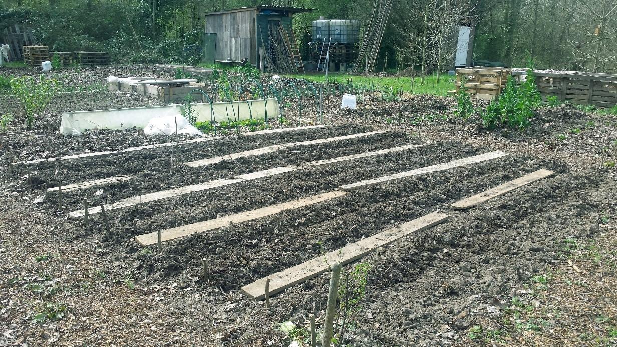 AAP Atelier participatif «Semis d'été et serre à tomates», samedi 20 mai à Elancourt 🗓 🗺
