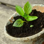 GRAINES DE SOLIDARITÉ – Lancement de la campagne – Gardez vos graines, c'est une ressource !