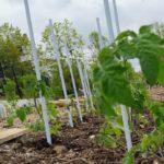 Échange de plants et visite du jardin des Saules à Guyancourt