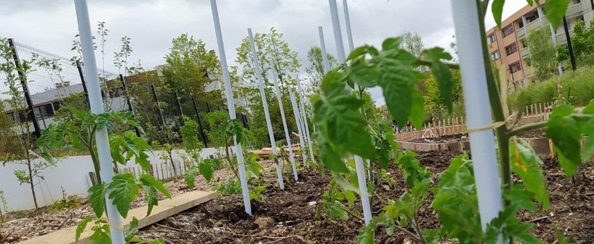 Échange de plants et visite du jardin des Saules à Guyancourt 🗓