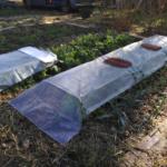 AAP Semis d'hiver et mise au repos du jardin – le 6 nov. à Élancourt