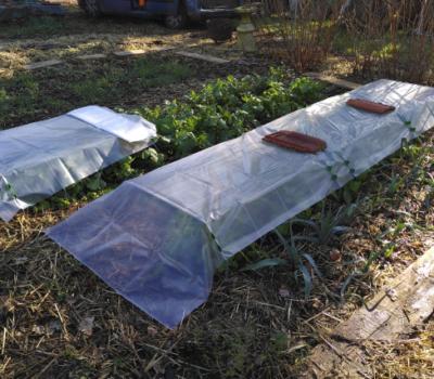 AAP Semis d'hiver et mise au repos du jardin – le 6 nov. à Élancourt 🗓 🗺