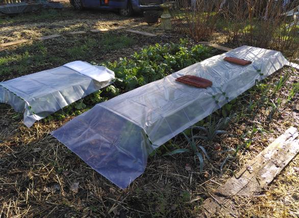 Read more about the article AAP Semis d'hiver et mise au repos du jardin – le 6 nov. à Élancourt 🗓 🗺
